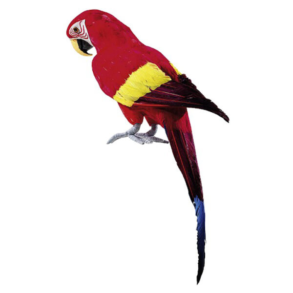 deco019 perroquet deco rouge multicolore location