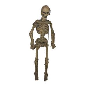 de142 squelette decoratif location